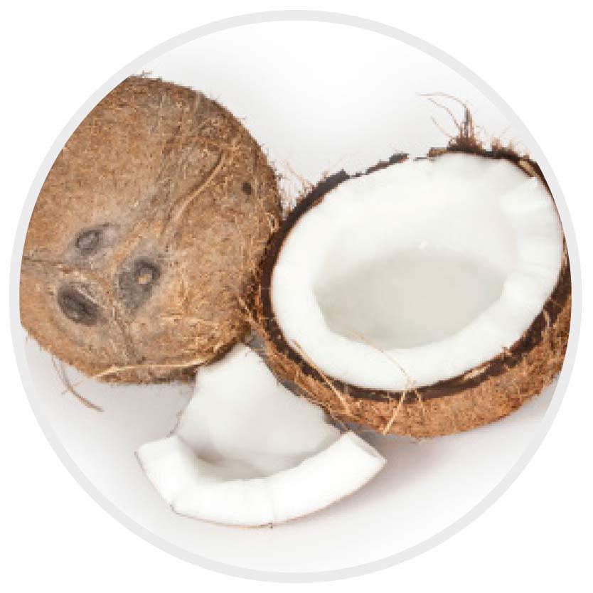 kokosnuss_milk shake haarpflege